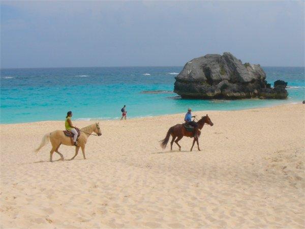 horseback riding on the beach. horseback riding is a